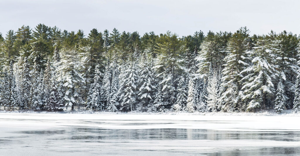 Picture of a treed shoreline in winter with a frozen lake in front of it. Photo by Kayvan Mazhar.